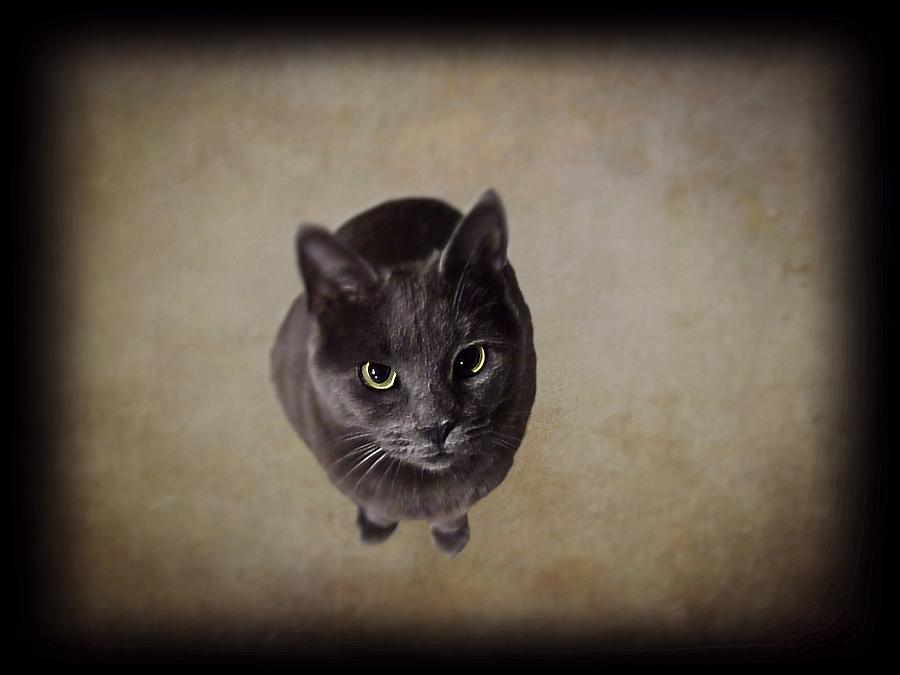Cat Photograph - Sterling The Cat by David Dehner