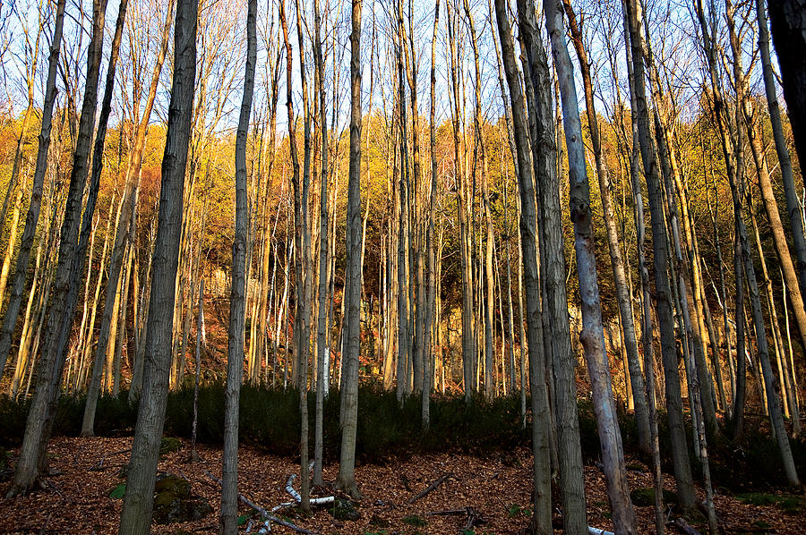 Trees Photograph - Sticks by Mike Feraco