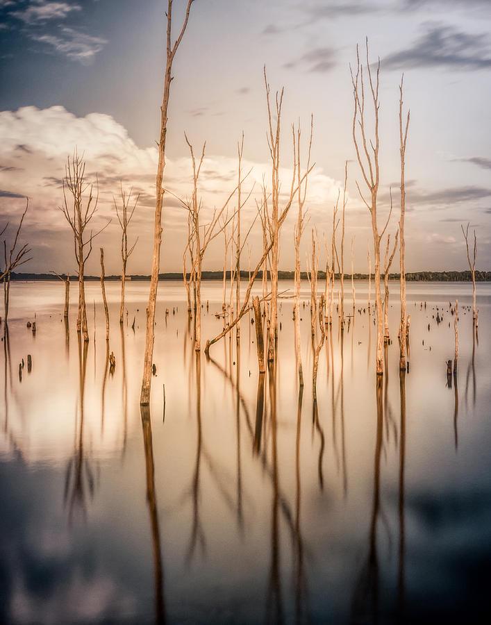 Sticks Photograph by Steve Stanger