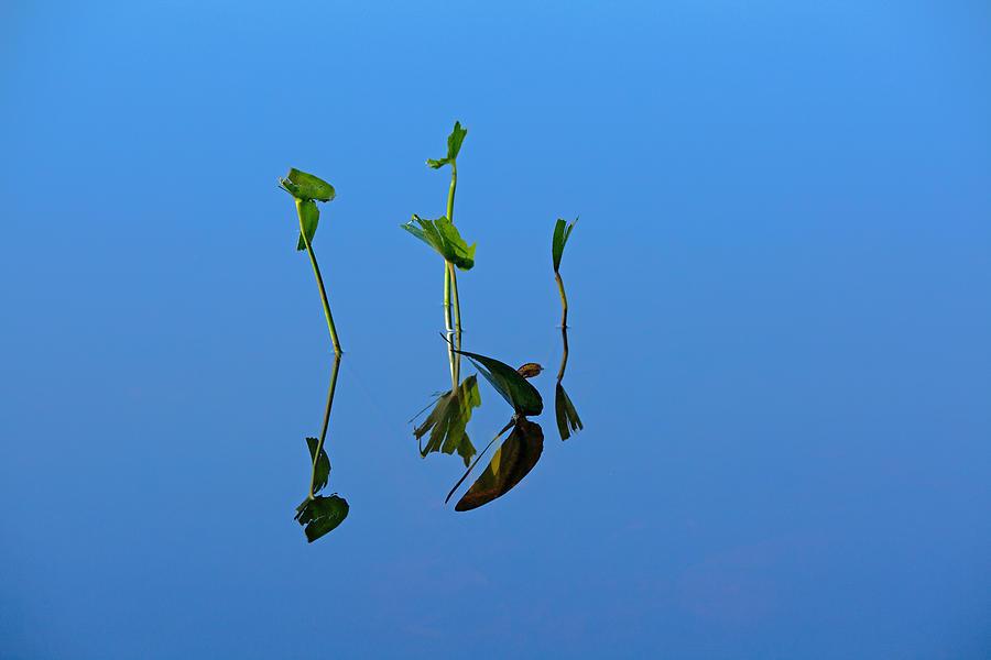 Pond Photograph - Still by Karol Livote