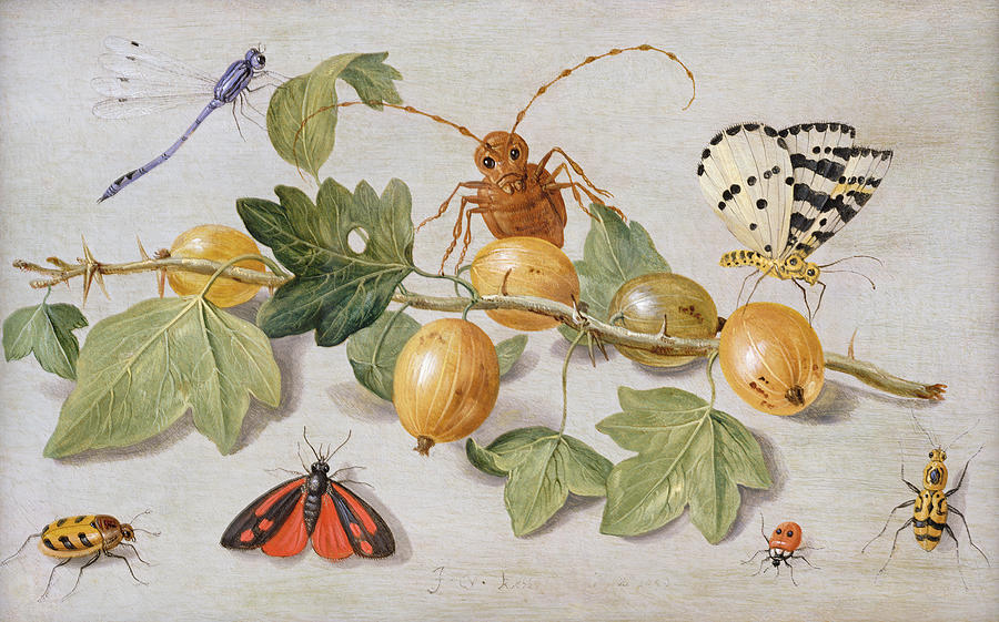 Gooseberry Painting - Still Life Of Branch Of Gooseberries by Jan Van Kessel