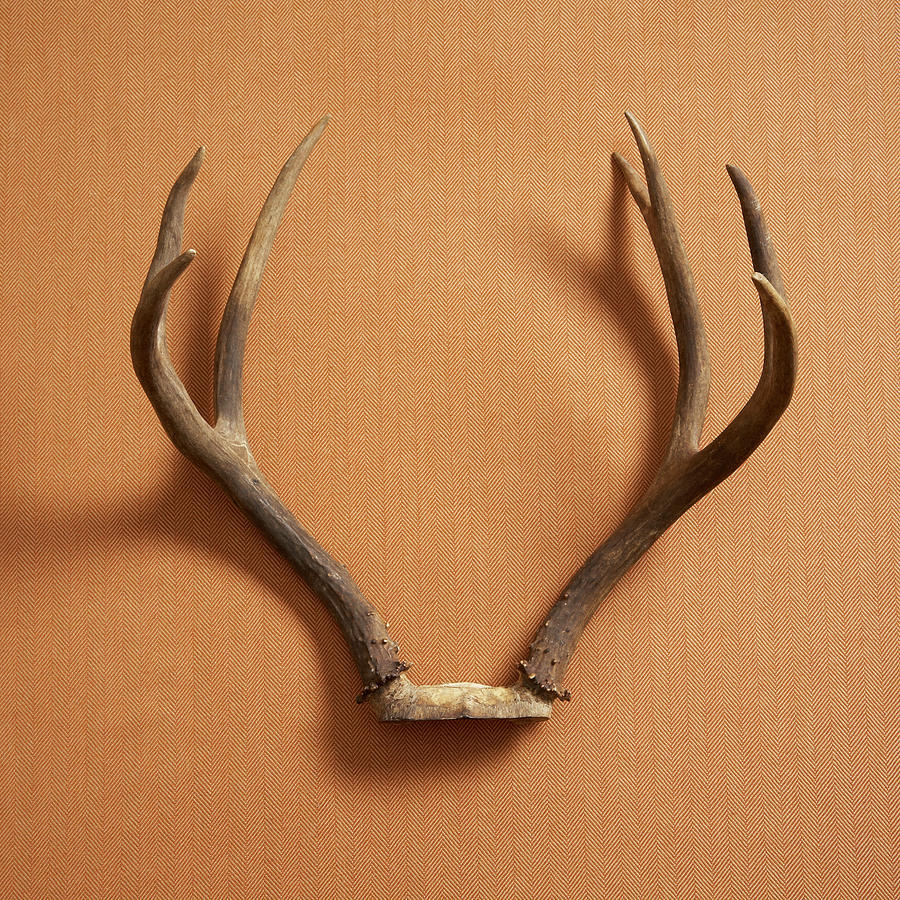 Still Life Of Deer Antlers On A Fabric Photograph by Gwen Rodgers