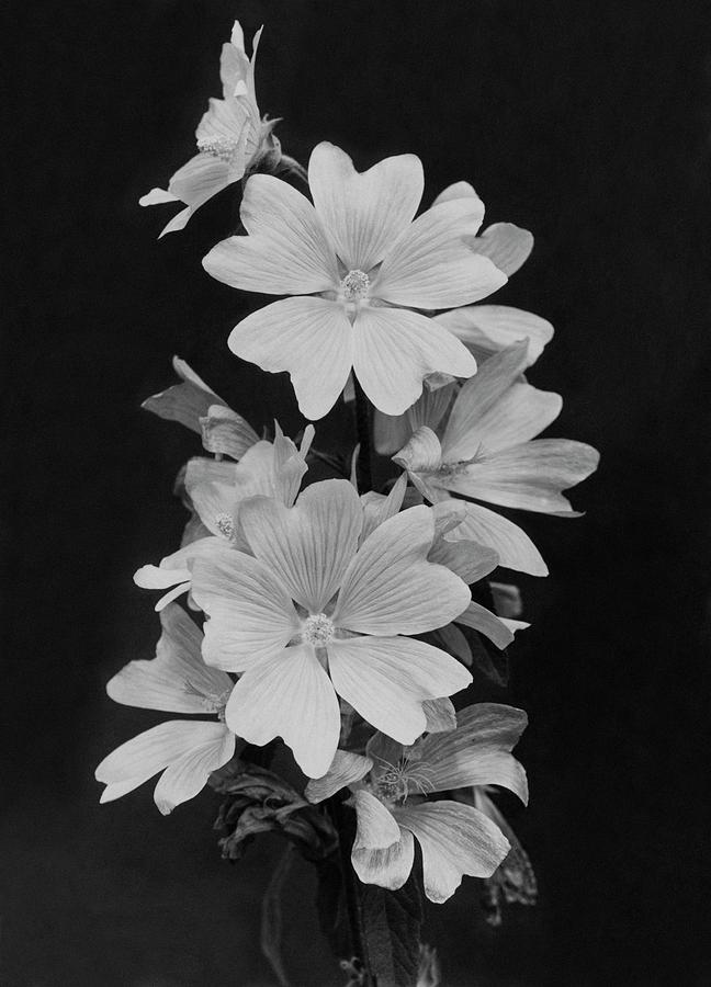 Still Life Of Flowers Photograph by Reginald A. Malby