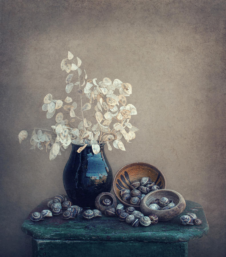 Snail Photograph - Still Life With A Lunaria And Snails by Dimitar Lazarov -