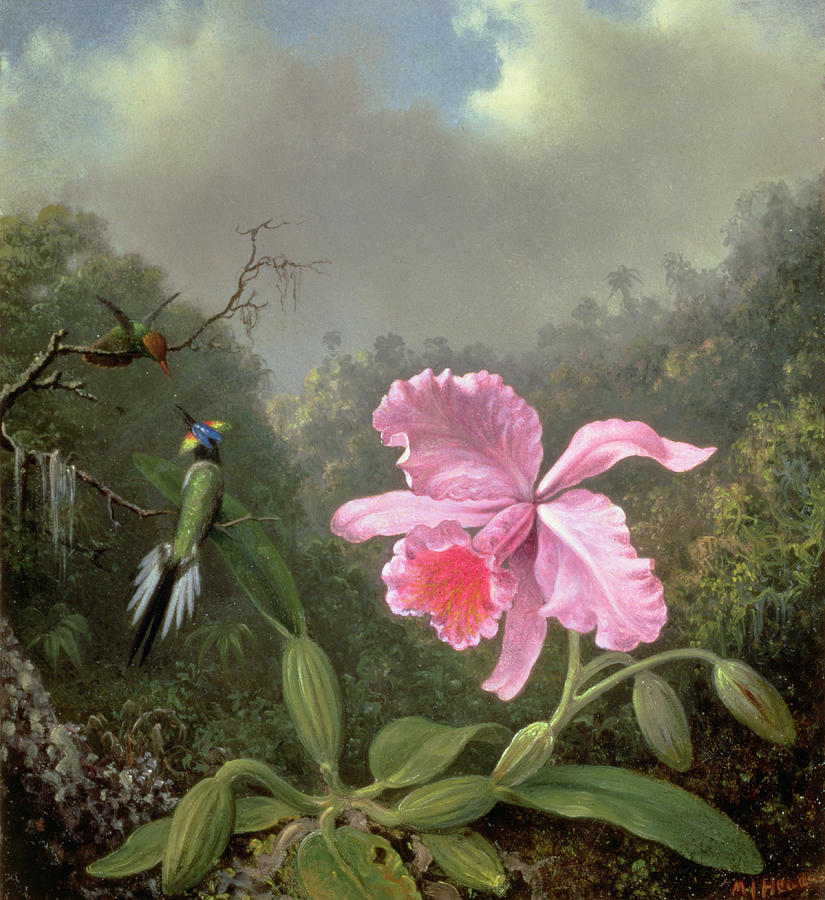 Heade Painting - Still Life With An Orchid And A Pair Of Hummingbirds by Martin Johnson Heade