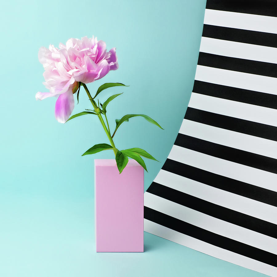 Still Life With Pink Peony And Striped Photograph by Juj Winn