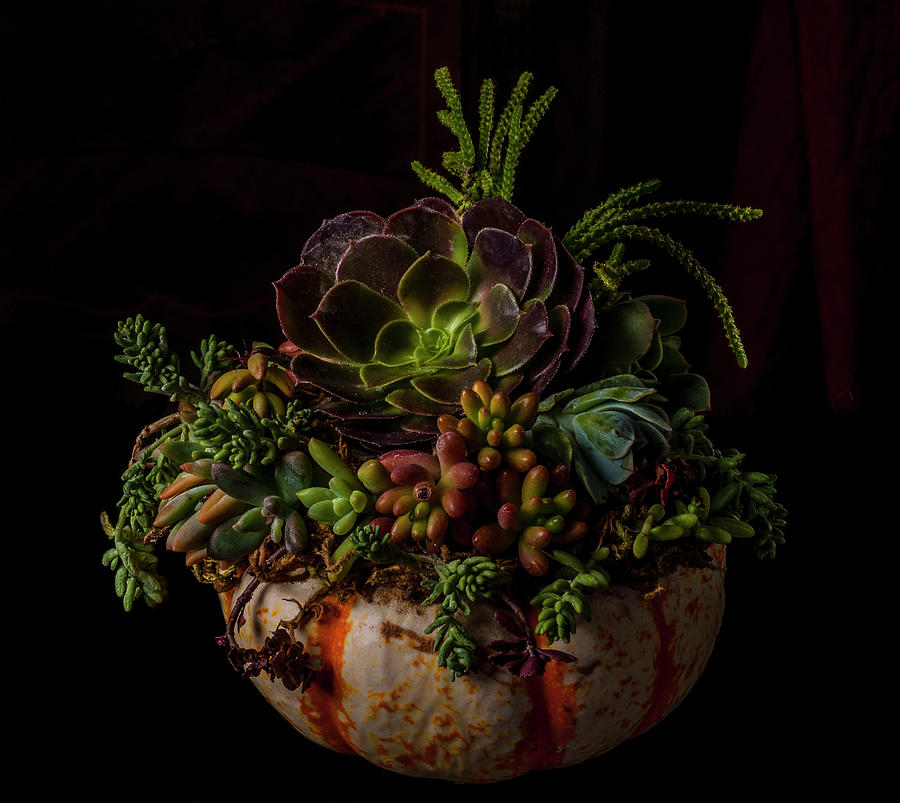 Still Life With Pumpkin And Succulents Photograph by Bill Gracey