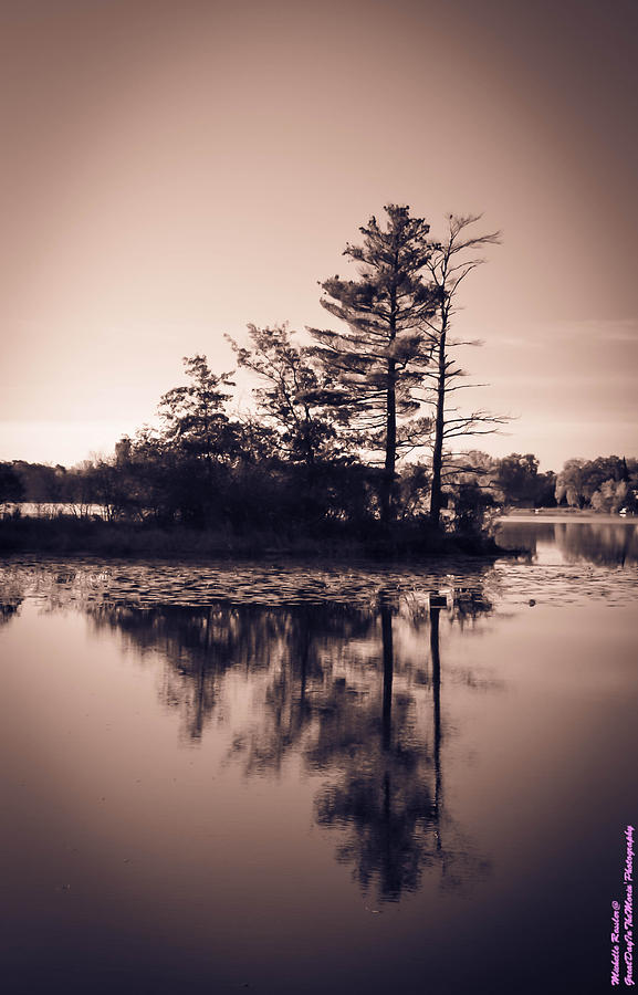 Landscape Photograph - Still by Michelle Ressler