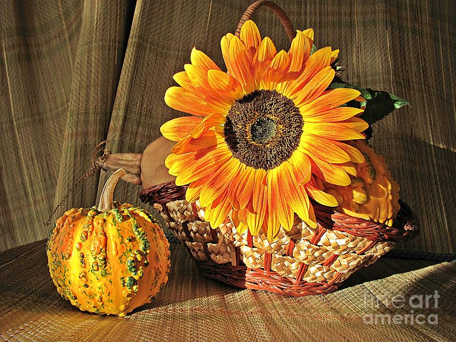 Stillife Photograph - Stillife With  The Sunflower And Pumpkins by Halyna  Yarova