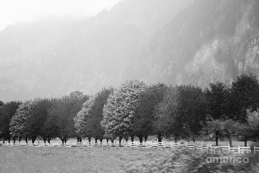 Stillness And Motion Photograph