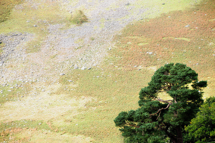 Ireland Photograph - Stillness. Wicklow Mountains. Ireland by Jenny Rainbow