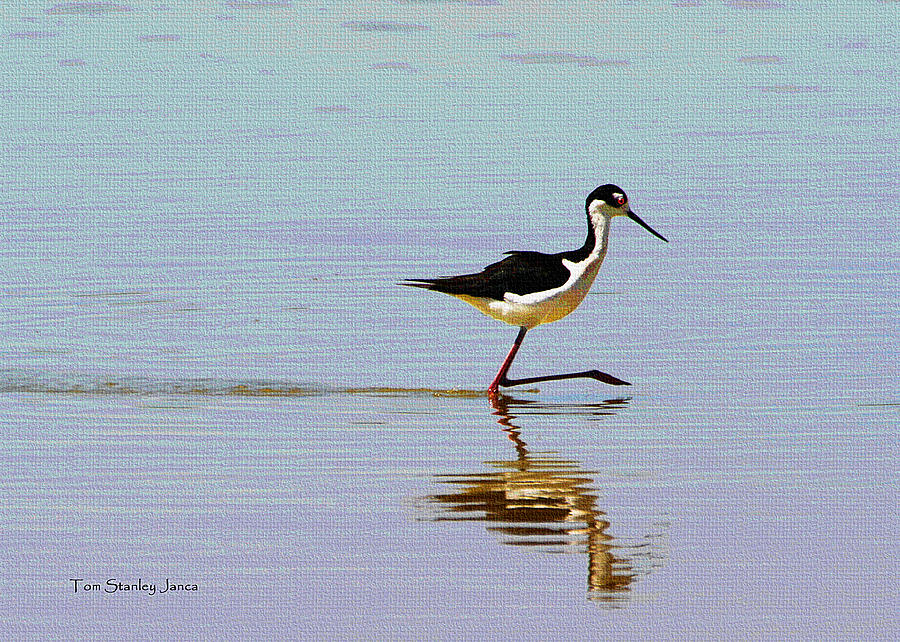 Grp Photograph - Stilt Out For A Stroll by Tom Janca