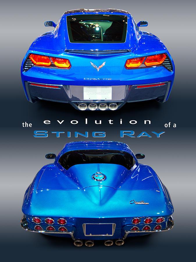 stingray evolution