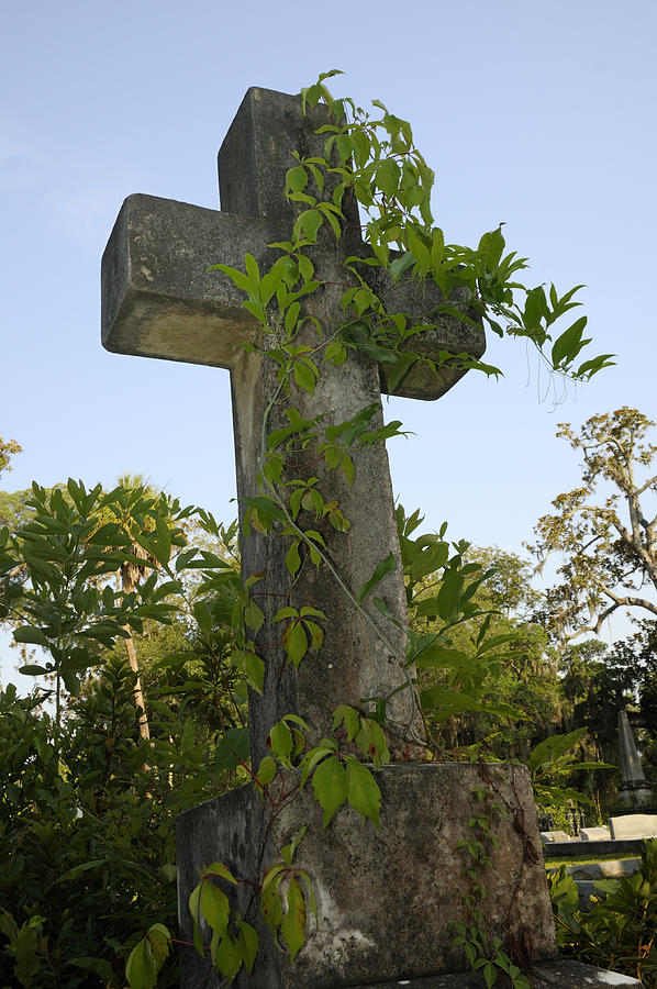 Stone cross with vines Photograph by Bradford Martin