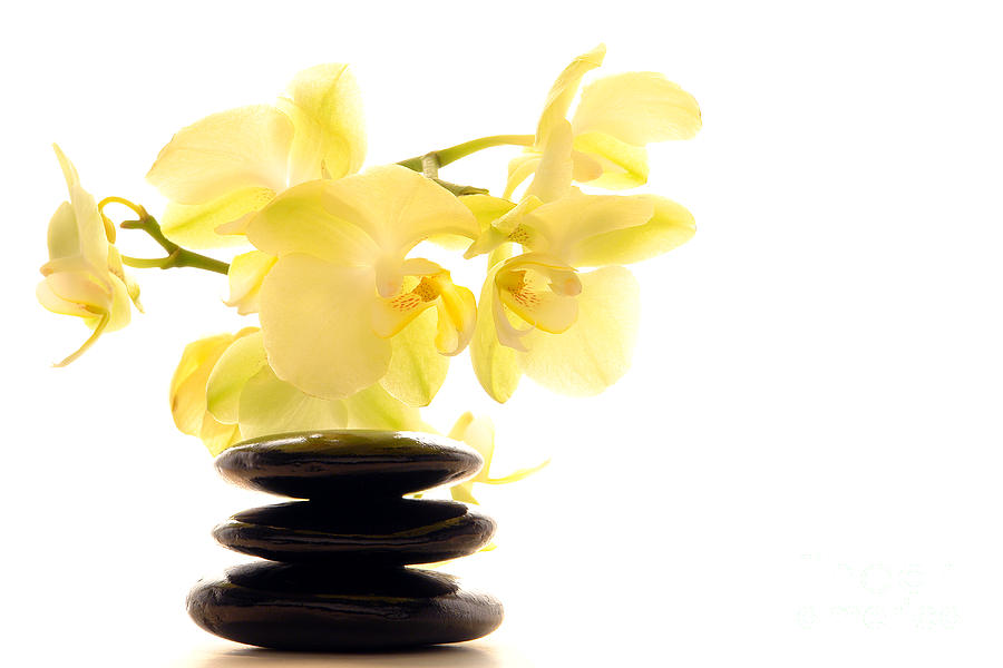 Aromatherapy Photograph - Stones And Orchid by Olivier Le Queinec