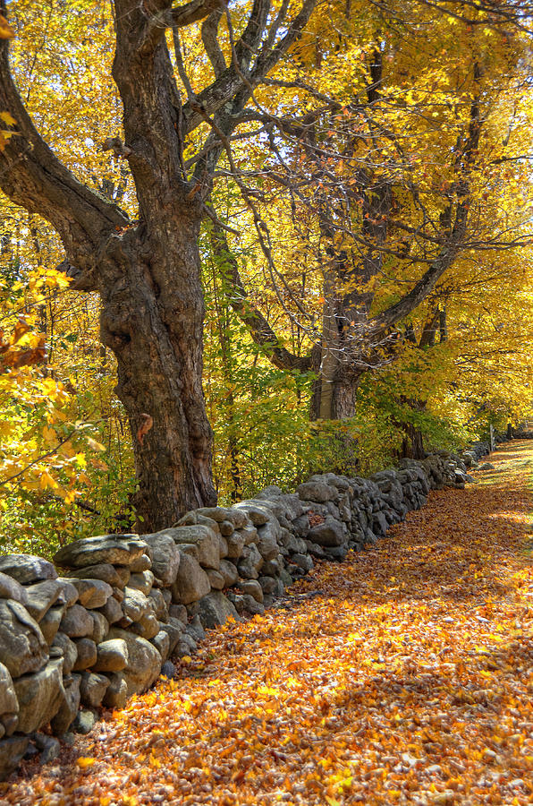 Autumn Photograph - Stonewall In Autumn by Donna Doherty
