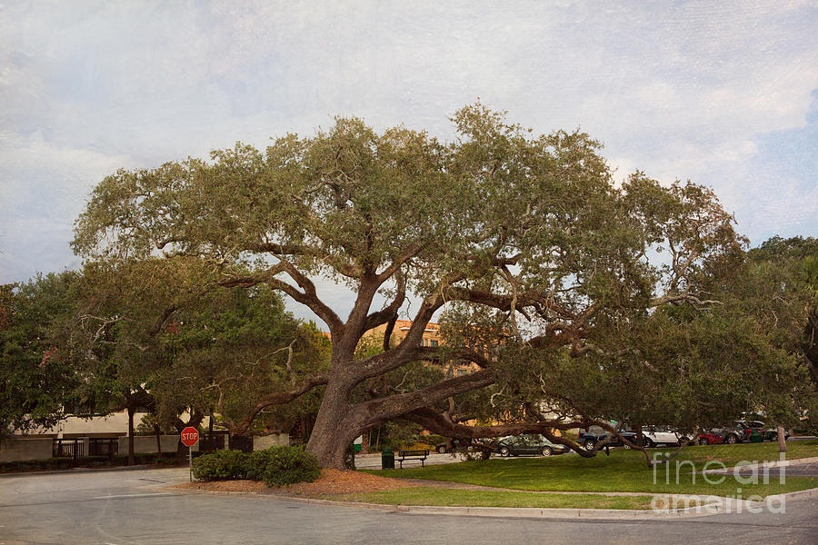 Live Oaks Photograph - Stop And Rest by Kay Pickens