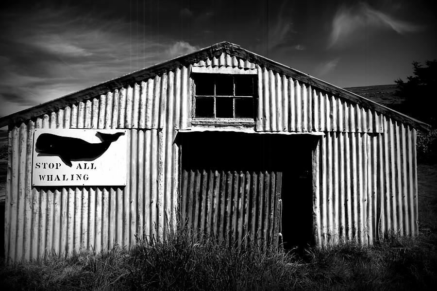 Whaling Photograph - Stop Whaling by Amanda Stadther