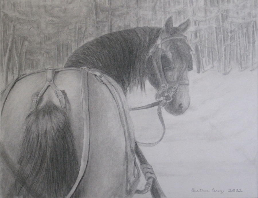 Horse Drawing - Stopping In A Snowy Wood by Heather Perez