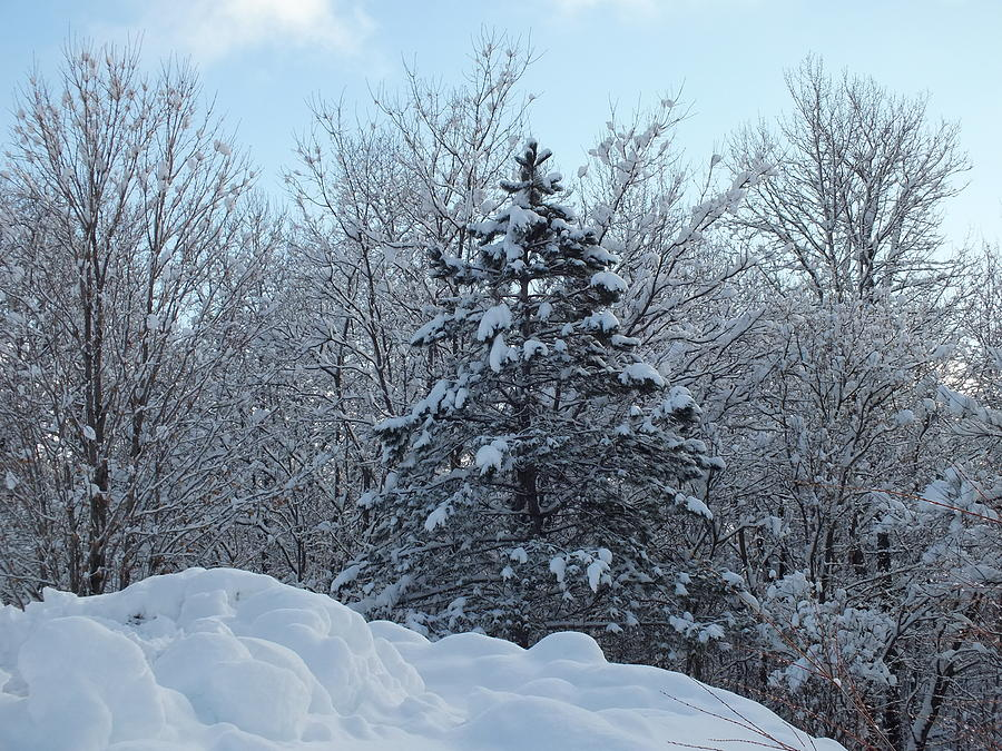 Winter Storm Photograph - Storm Ends 2 by Gene Cyr