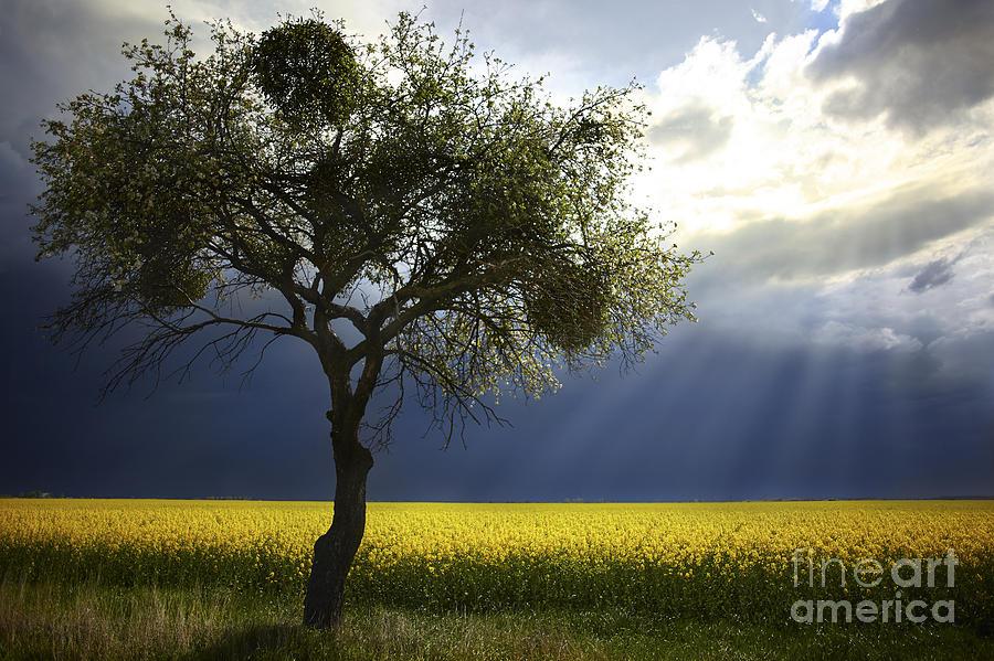 Storm Is Coming Photograph by Bernadett Pusztai