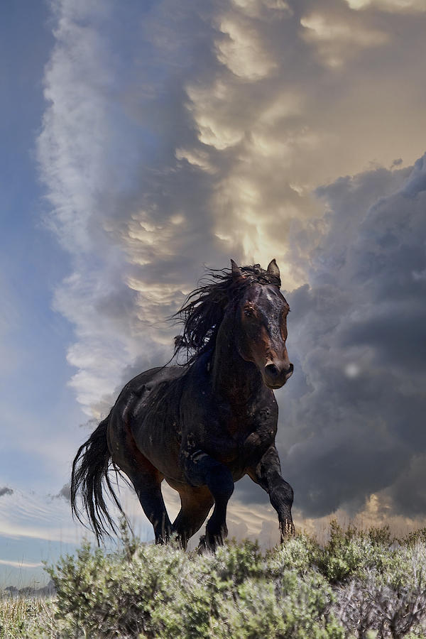 Mustang Photograph - Storm by Jana Thompson
