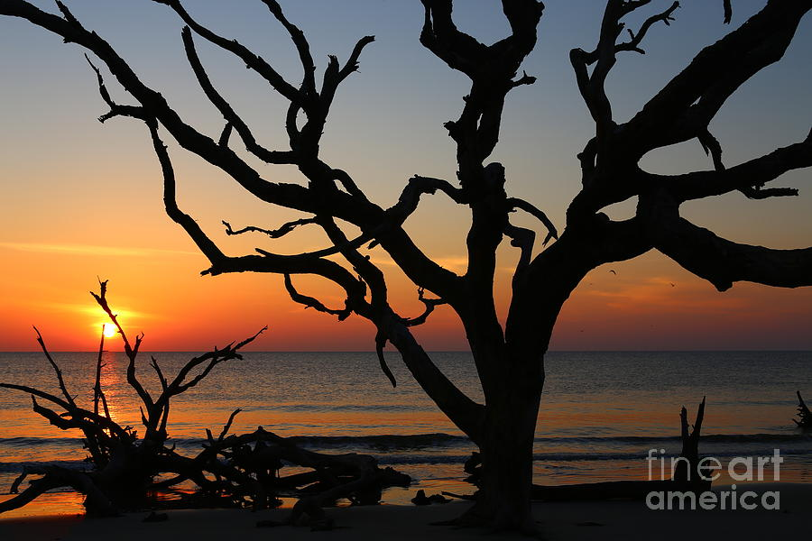 Jekyll Island Photograph - Storm Skeletons by Marty Fancy