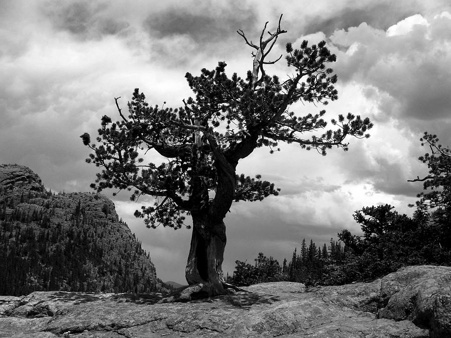 Tranquil Photograph - Storm Tree by Tranquil Light  Photography