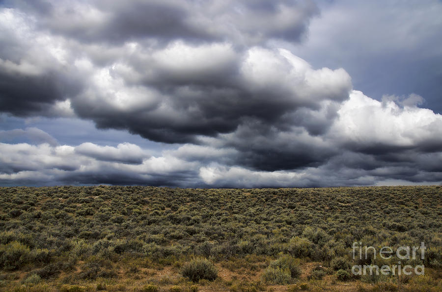 Stormy Wyoming Sage Brush by Donna Greene