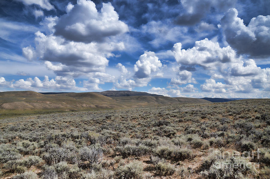 Stormy Wyoming Sage Brush II by Donna Greene