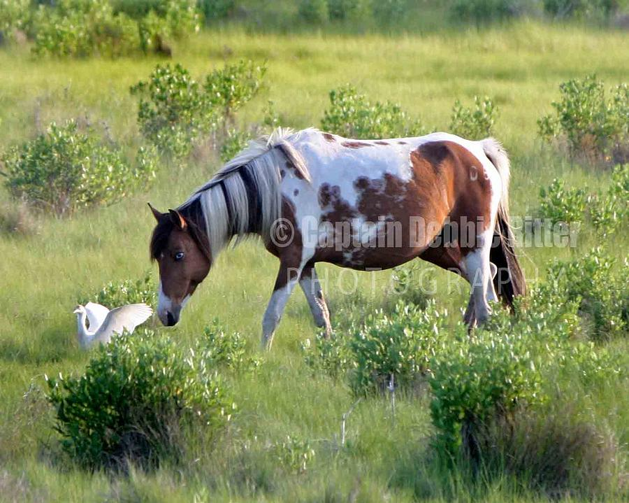 Wild Horse Photograph - Story Book by Captain Debbie Ritter