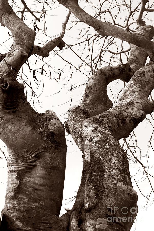 Nature Photograph - Story Tree by Jennifer Apffel