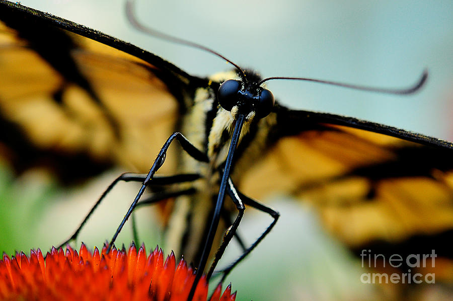 Butterfly Photograph - Straight On For You by Lois Bryan