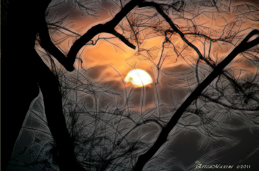 Trees Photograph - Strange Morning by Ericamaxine Price