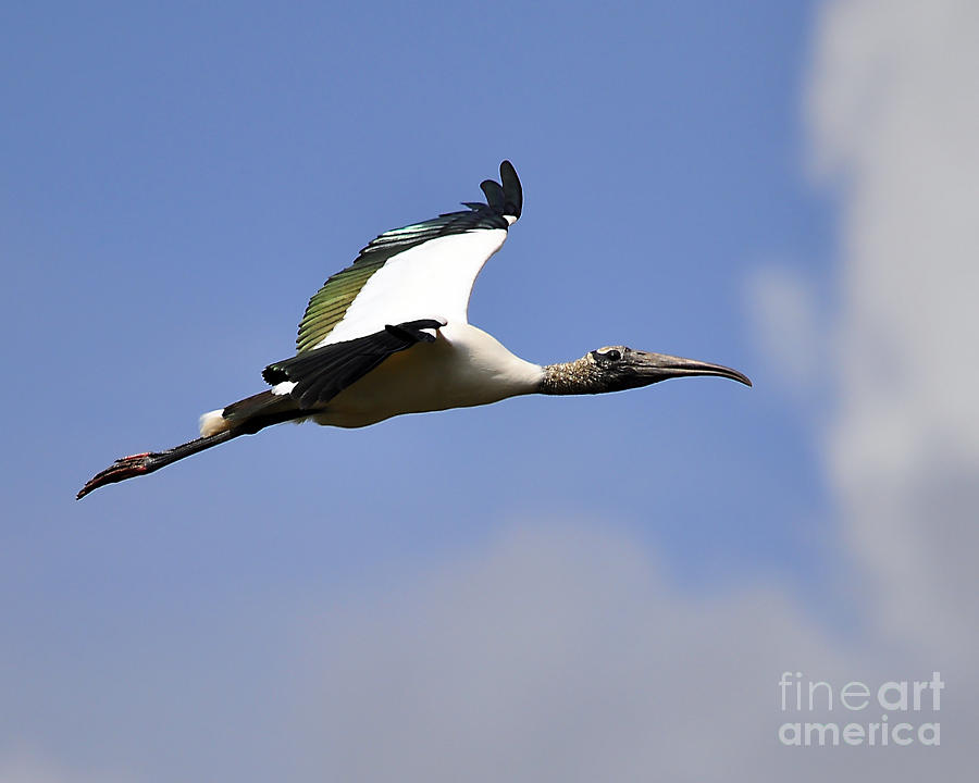 Stork Photograph - Stratostork by Al Powell Photography USA