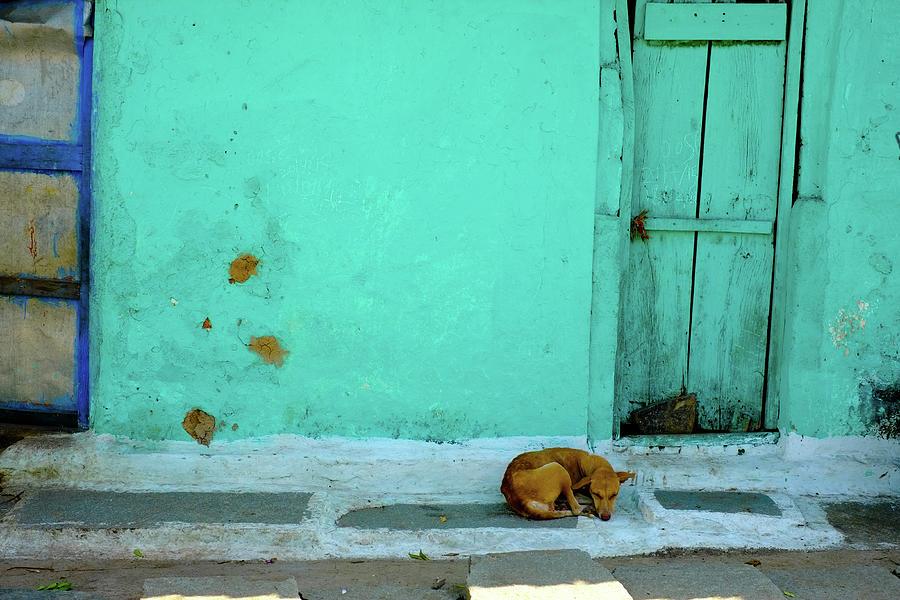 Stray Dog On Street Against Green Photograph by Prajoesh Chathoth / Eyeem