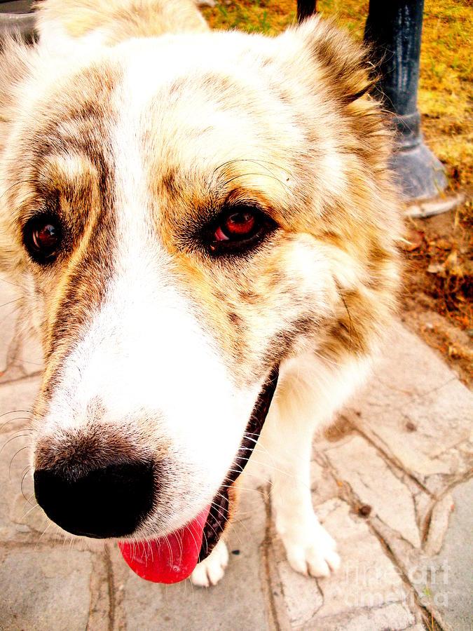 Dog Photograph - Stray by Sophia Elisseeva