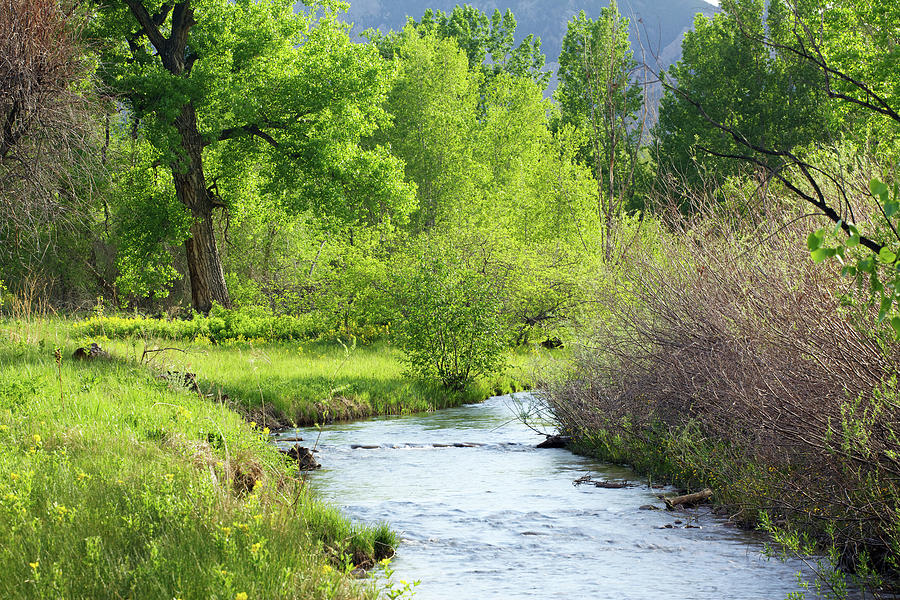 Stream Flowing Through Green Fields Photograph by Beklaus