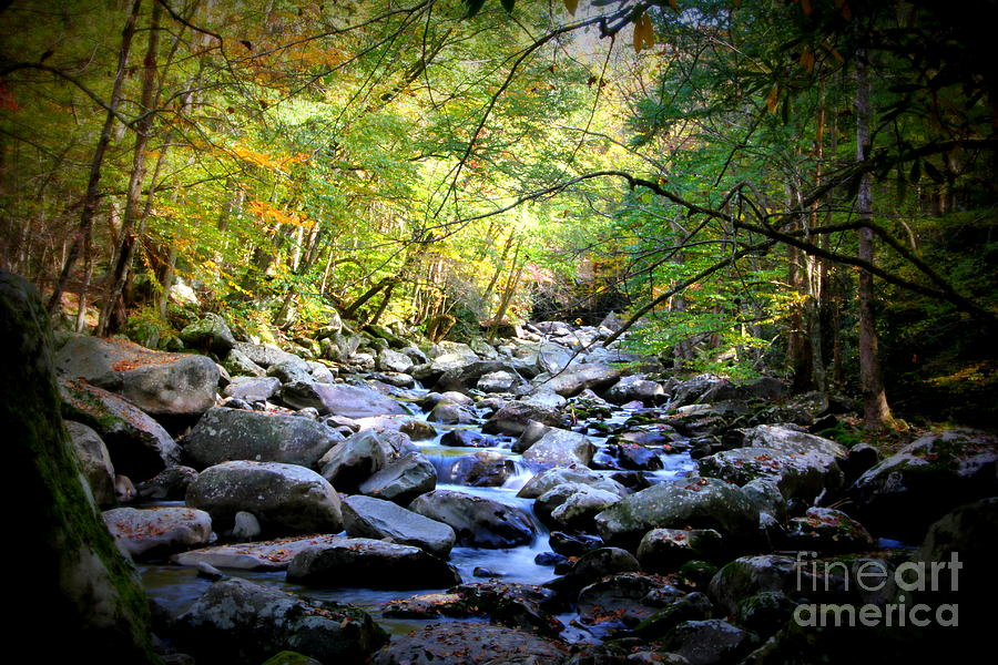 Stream in the Smokies by Cynthia Mask