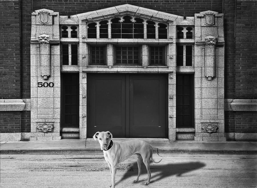 Architecture Photograph - Street Dog by Larry Butterworth
