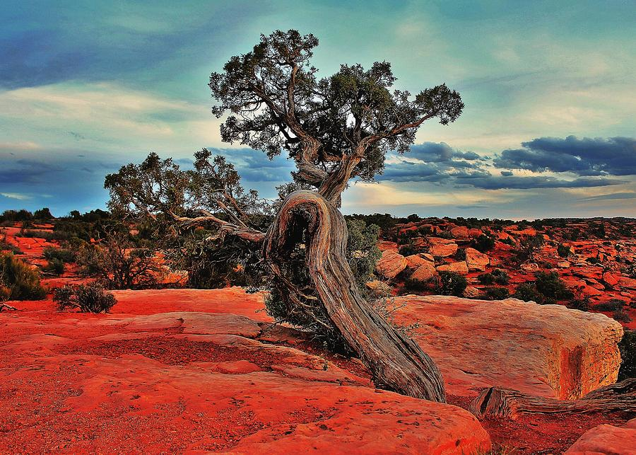 Canyonlands Photograph - Strength by Benjamin Yeager