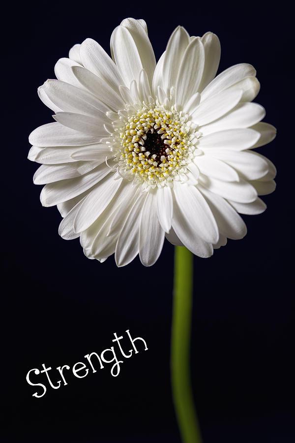 Still Life Photograph - Strength by Kim Andelkovic