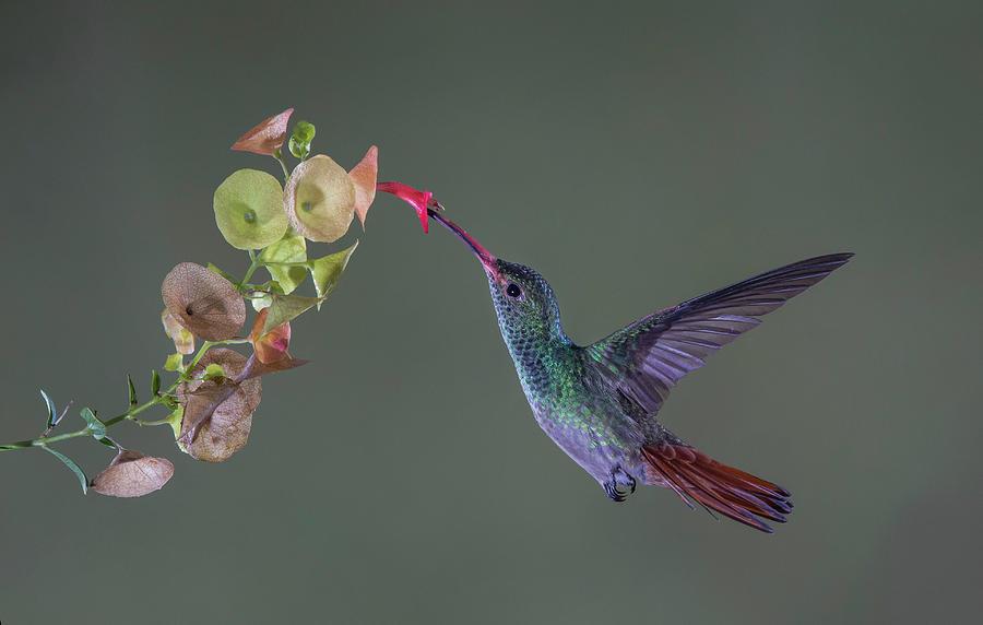 Bird Photograph - Stretch by Greg Barsh