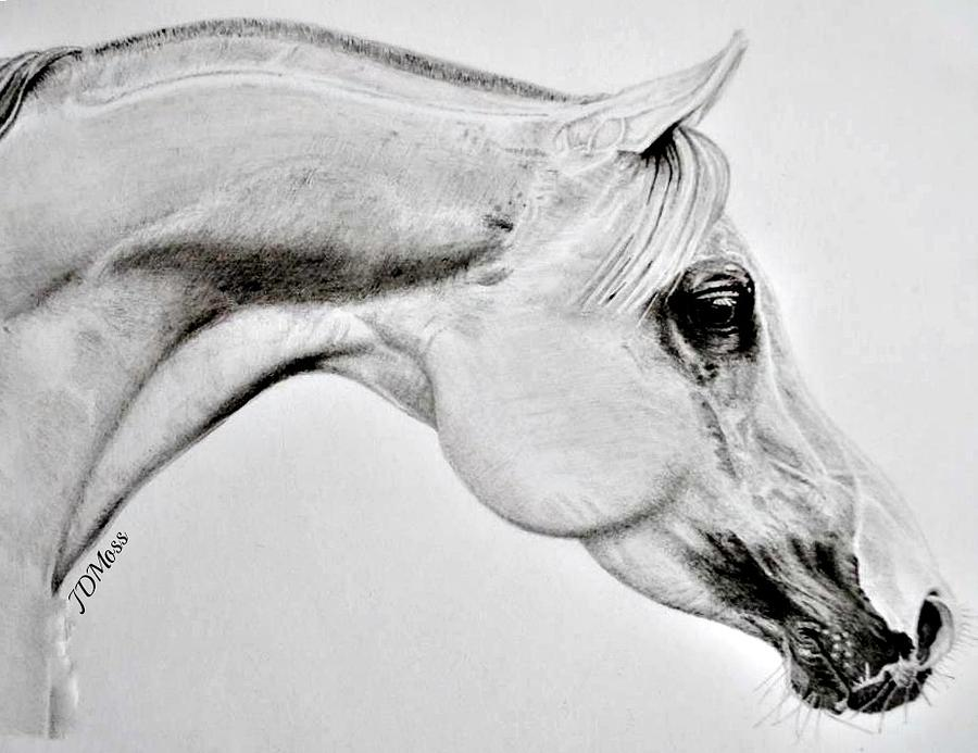 Horse Drawing - Stretching by Janet Moss