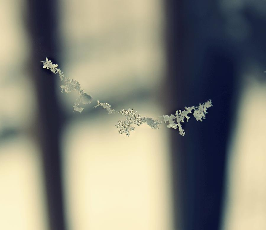 Snowflakes Photograph - String of Snowflakes by Candice Trimble