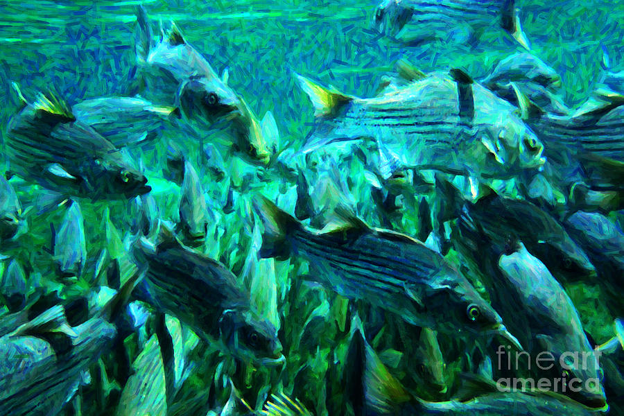 Florida Photograph - Striped Bass - Painterly V1 by Wingsdomain Art and Photography