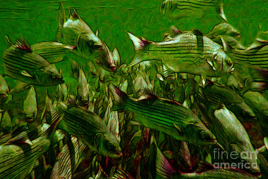 Florida Photograph - Striped Bass - Painterly V2 by Wingsdomain Art and Photography