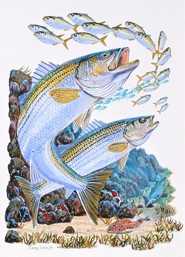 Striped Bass Painting - Striped Bass Rocks by Carey Chen
