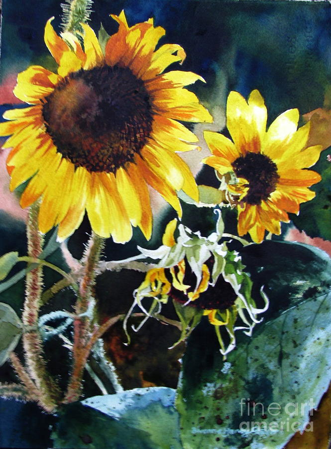 Sunflowers Painting - Stroked By Sun by Bivenne Harvey Staiger