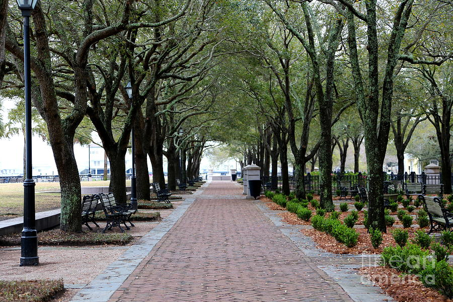 Stroll In Charleston Park Photograph